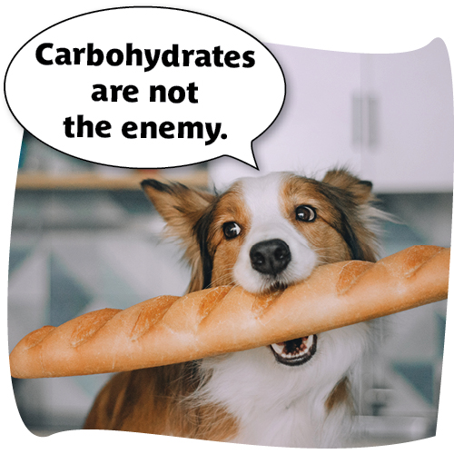 "dog with baguette saying ""carbohydrates are not the enemy."""
