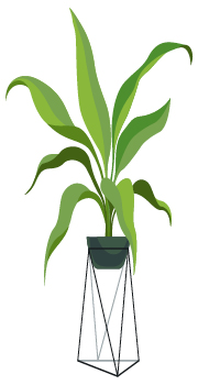 potted plant | forest bathing benefits