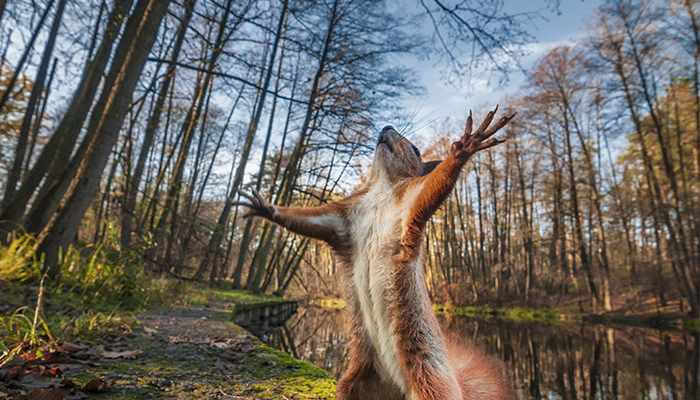 squirrel standing on hind legs and arms open in forest | forest bathing benefits