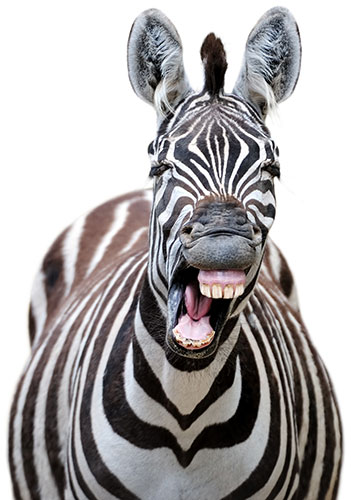 laughing zebra | benefits of laughing