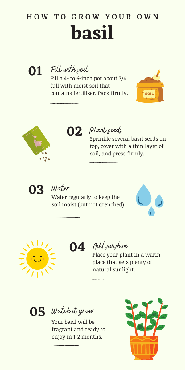 Infographic: How to grow your own basil