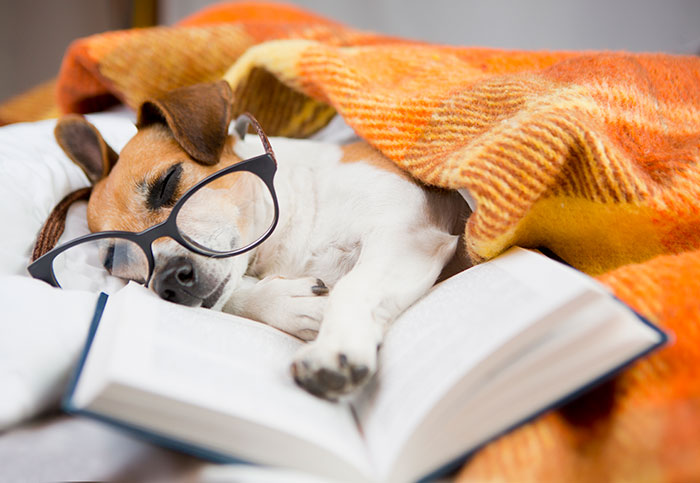 Dog with glasses sleeping with book