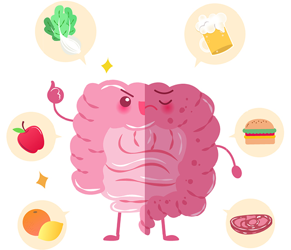 Illustration of gut with food
