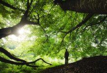 man standing among trees