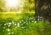 Sunny spot with a tree and small white flowers