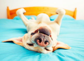 Healthy Buffs: Quick fixes for sleeping better tonight