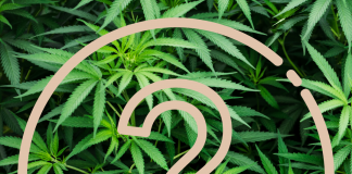 Image of question mark in front of weed plant