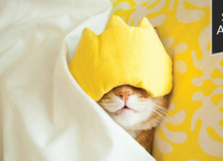Student advocate: Cat sleeping in bed with eye mask on