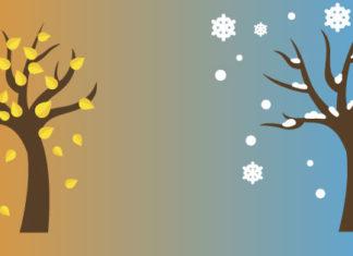 Fall to winter illustration