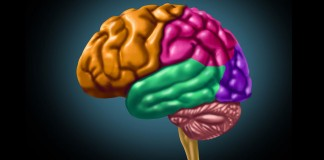 Colorful brain