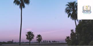 palm tress at sunset