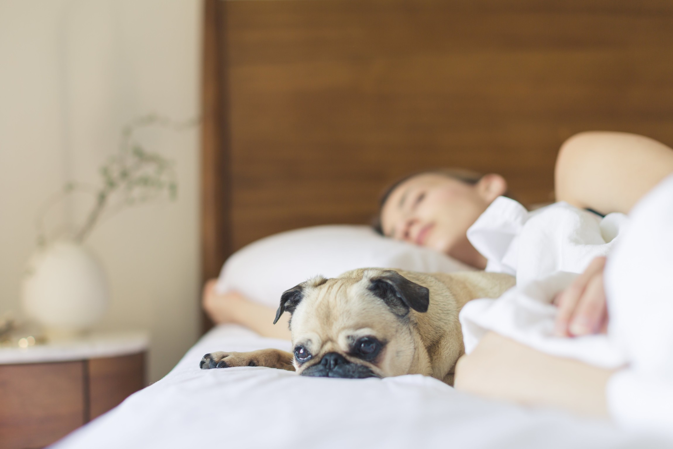 Sleeping Right, image of a women and a small dog sleeping on a bed
