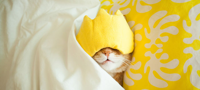 Sleeping cat in bed with eye mask on