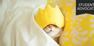 Student advocate: Sleeping cat in bed with eye mask on