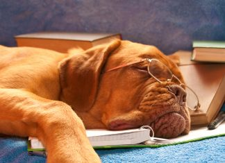 Sleeping dog on books