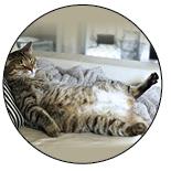Fat, sleeping cat