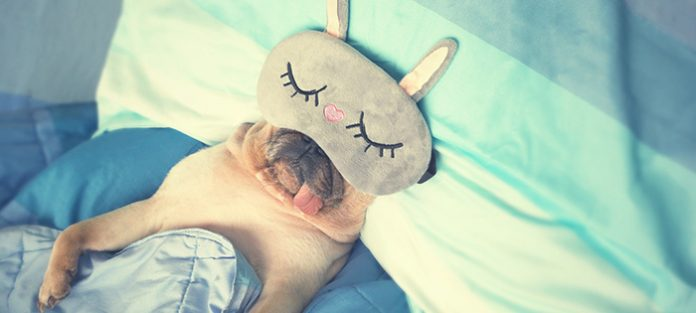 dog in bed with sleep mask | best sleep cycle app