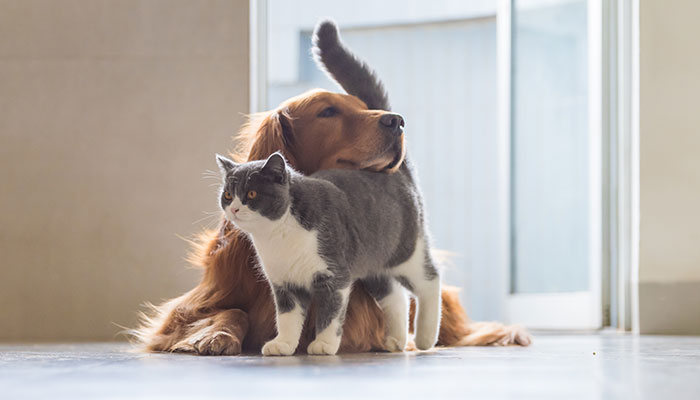 happy dog and cat | how to deal with toxic friends