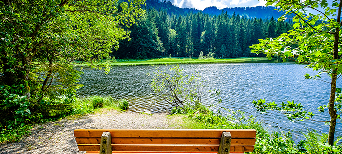 wood bench by scenic lake | forest bathing benefits