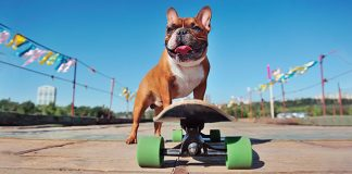 dog on a skateboard | outdoor workouts