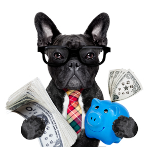 funny boss dog holding money