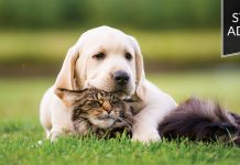 Student advocate: Dog resting on a cat