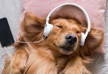 dog with headphones | sound for sleep