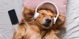 dog with headphones   sound for sleep