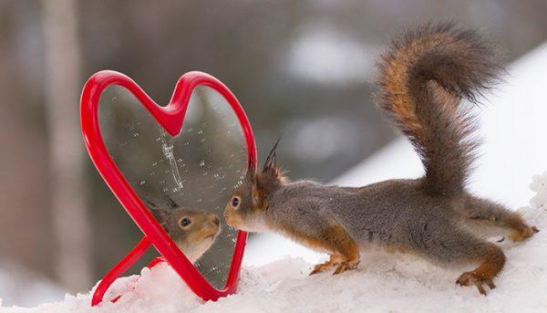Squirrel looking into a heart mirror