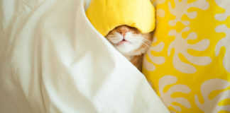 Cute sleeping ginger cat wearing sleep mask.