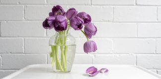 wilted purple flowers