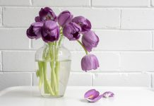 wilted purple tulips in vase