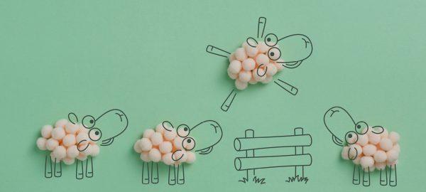 jumping sheep