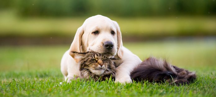 dog resting on cat