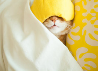 Cat sleeping in bed with eye mask on