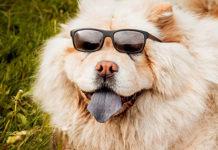 Happy dog wearing sunglasses