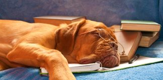 dog sleeping on books