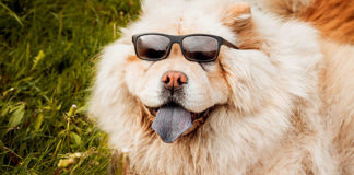 Happy dog wearing sunglasses