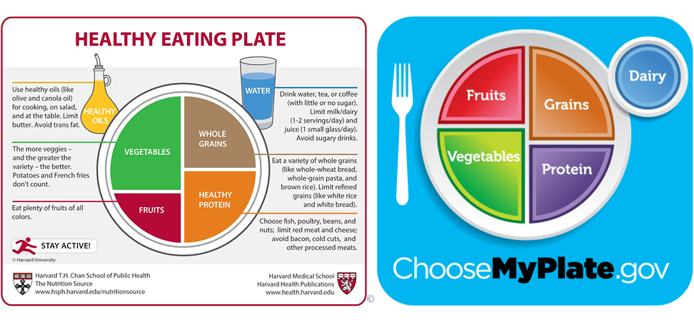 Harvard healthy eating plate next to choose my plate