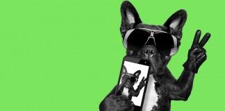 A dog wearing sunglasses taking a selfie