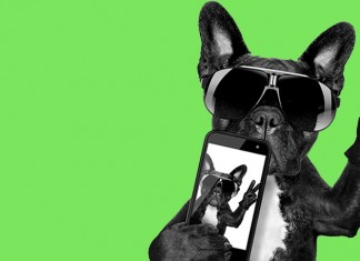 A dog wearing sunglasses taking a selfie